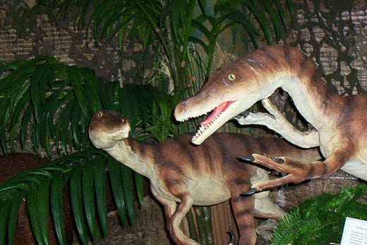 Velociraptors - Quincy Museum Dinosaurs - Quincy IL